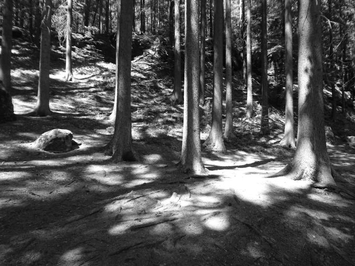 Boehm.Wald.DSC_0094.sw